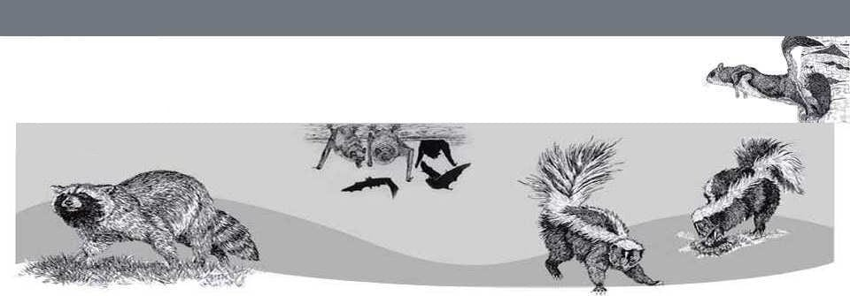 Skunk-hero-banner